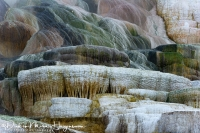Mammoth Hot Spring-Palette Spring