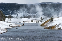 Bizon-Bison-Firehole River