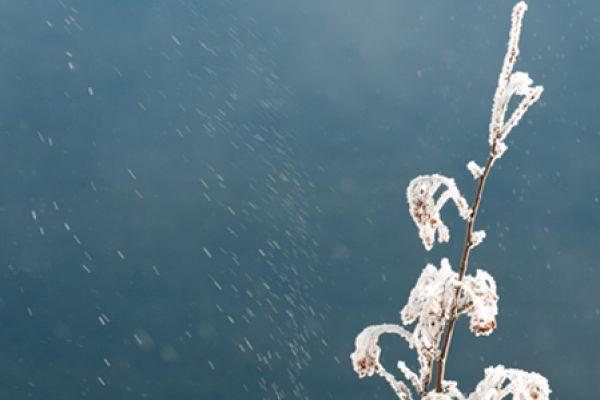 berijpte-bessen-ice-berries-20141219-1209227244A919E7B5-DDE4-DB8E-6471-BA46BE538934.jpg