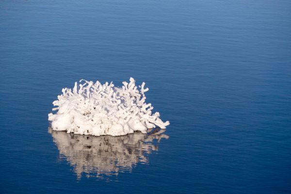ijs-egel-ice-porcupine-20141219-156216120864D02631-FDDB-A6BC-E26B-A77B84D4972B.jpg