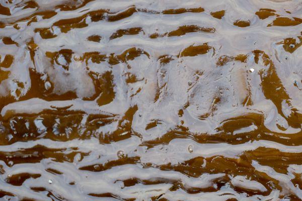 kelp-relief-20141219-200822362260207134-FFDE-1925-FC8D-CF76AB2176D3.jpg