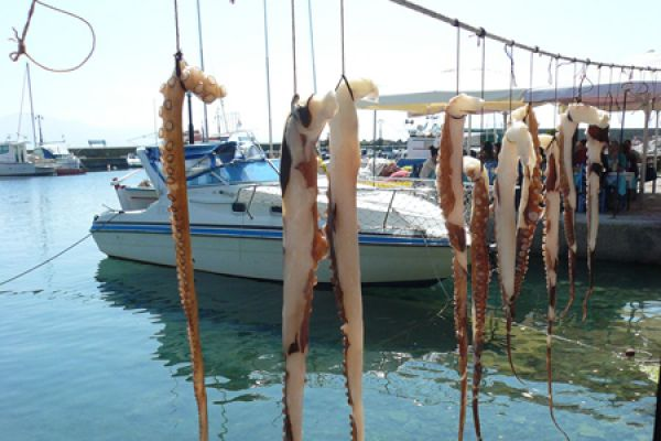 drogende-inktvis-drying-squid-20150527-1032043503F89709FE-5560-6BF0-2A80-7CD8CE5D1544.jpg