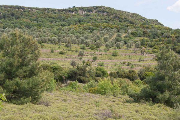 landschap-lesbos-landscape-lesvos-20150527-1738040900A1A447D4-6FFE-0872-3ADF-01E6D7142FDA.jpg