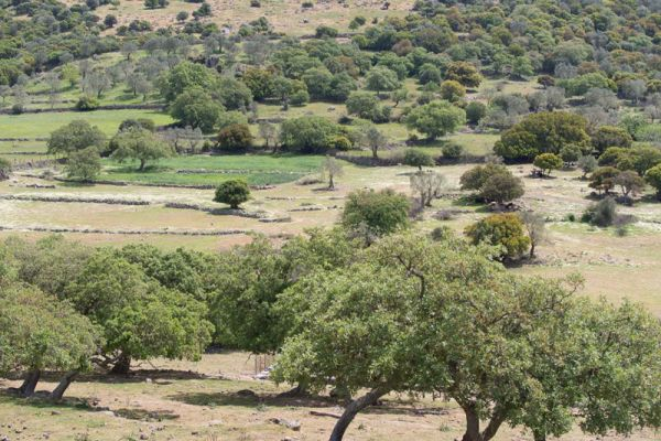olijfboomgaard-olivetrees-20150527-117323653027388023-9811-26E3-7C21-10D7E7008EF5.jpg