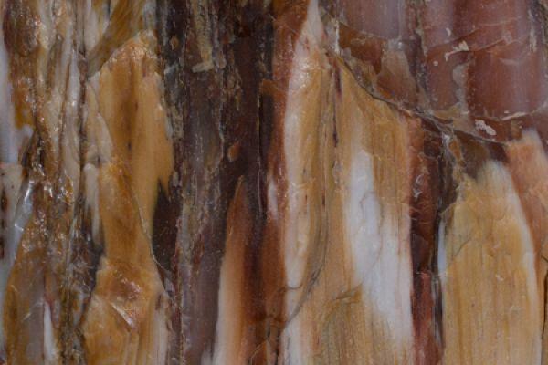 versteend-woud-stone-forrest-inside-20150527-12725805472DC004B6-4965-A49E-30CE-A248A4B8B937.jpg