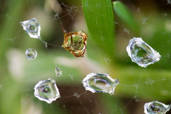 waterdruppels-waterdrops-2-20150527-206727534212A37A25-11E0-BFBE-1069-3492E47B9F32.jpg