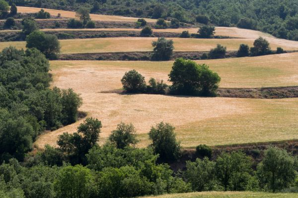 lijnenspel-in-spaans-landschap-spanish-pyrenean-landscape-6-20141219-1820713771F30FB41F-CDF2-D062-CC7F-CC4B7292C93E.jpg