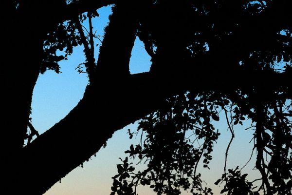 zonsondergang-op-sierra-de-piatones1-mdhF0646FE3-049E-309D-CE84-B4B7096C3726.jpg