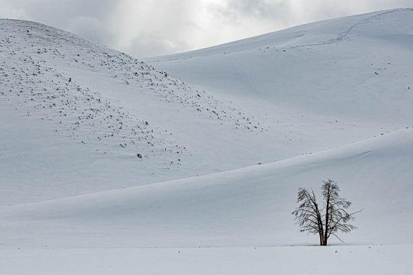 hayden-valley-lonely-treeB65B25F3-7B57-2059-B1F6-2427E01BC0F5.jpg