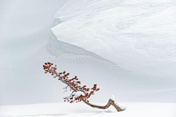 hayden-valley-lonely-treeE01928A2-6EB8-5EE2-78C5-0D7BB1D10C6A.jpg