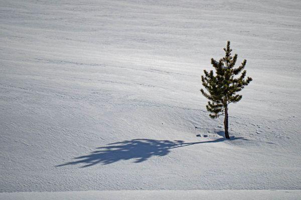 nzaam-lonely-einsam-md601B66CE-AC96-F3F2-7915-376166F93EC4.jpg