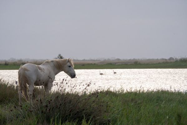 camargue-paard-wild-horse-20141220-1813658539358A4EAE-AFE7-3A2D-363F-EFD2FAFD6F5C.jpg