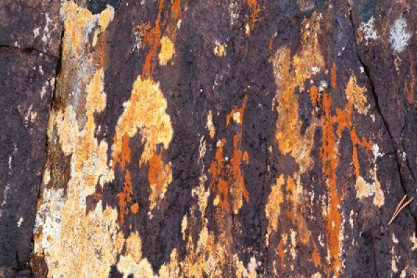 korstmos-lichen-flechte-lichenen-20160501-14717251075C2E98D0-BCED-C919-9DAC-878F9FDB8CB0.jpg
