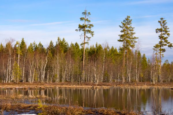 meertje-met-reflectie-lake-see-20160501-17364608638EFA9CE7-1BEA-2780-AE90-E4E96F77A4BD.jpg