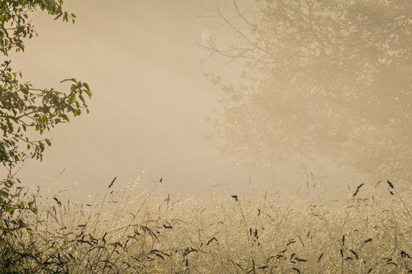 ochtend-mist-over-buekk-20141218-1826369948681F3083-A81F-3CB1-D4F1-58F2ED66839F.jpg