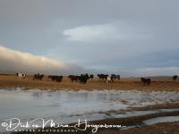 ijslandse_paarden_icelandic_horses_20141219_1343378867