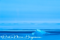 joekulsarlon_strand_-_beach_20150224_1778605407