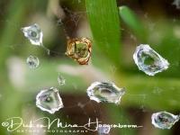 waterdruppels_-_waterdrops_2_20150527_2067275342