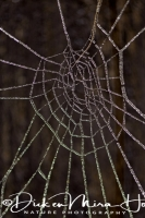 bevroren_web_frozen_web_20141220_1831121726