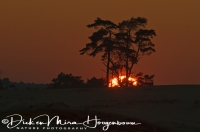 zonsondergang_op_de_veluwe_sundown_on_the_veluwe_national_park_20141220_1698878883