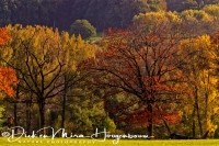 herfst_in_zuid-limburg_autumn_collors_1_20141220_1636104840