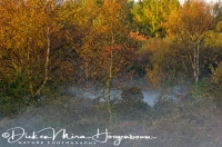 amsterdamse_waterleidingduinen_dunes_of_the_amsterdam_waterreserve_3_20141220_1176430707
