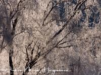 rijp_op_bomen_ripe_on_trees_20141219_1922087033