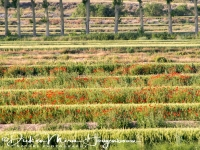 lijnenspel_in_spaans_landschap_spanish_pyrenean_landscape_10_20141219_1045645835