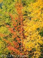 driekleur_-_three_color_-_drei_farbe_20171015_1581757839