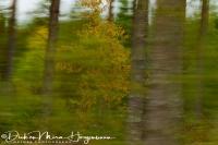 bomen_komen_voorbij_-_trees_are_comming_by_-_baeume_kommen_vorbei___20171015_1300775544