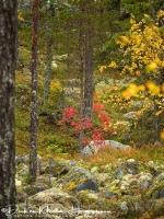 park_hamra_in_herfst_kleuren_-_hamra_national_park_in_autumn_colors_-_hamra_national_park_im_herbst__20171015_1475709272