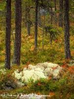 herfst_kleuren_op_de_grond_20171015_1248179716