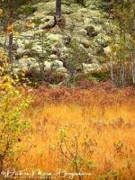 park_hamra_in_herfst_kleuren_-_hamra_national_park_in_autumn_colors_-_hamra_national_park_im_herbst___20171015_1994610852