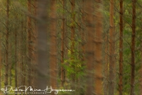 bomen_komen_voorbij_-_trees_are_comming_by_-_baeume_kommen_vorbei__20171015_1752963712