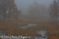 flatruet_in_de_mist_-_flatruet_in_fog_-_flatruet_im_nebel_20171015_1145928405